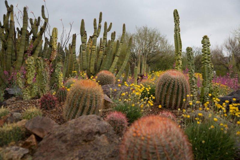tucson cactus desert
