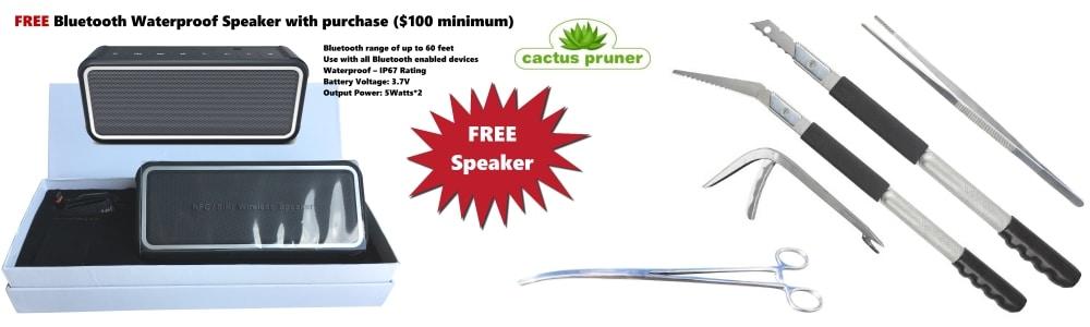 promo-cactus